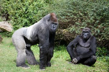 non human primate reproductive strategies Anthro 101: human biological evolution lecture 10: primate behavior – reproductive strategies kenneth feldmeier.